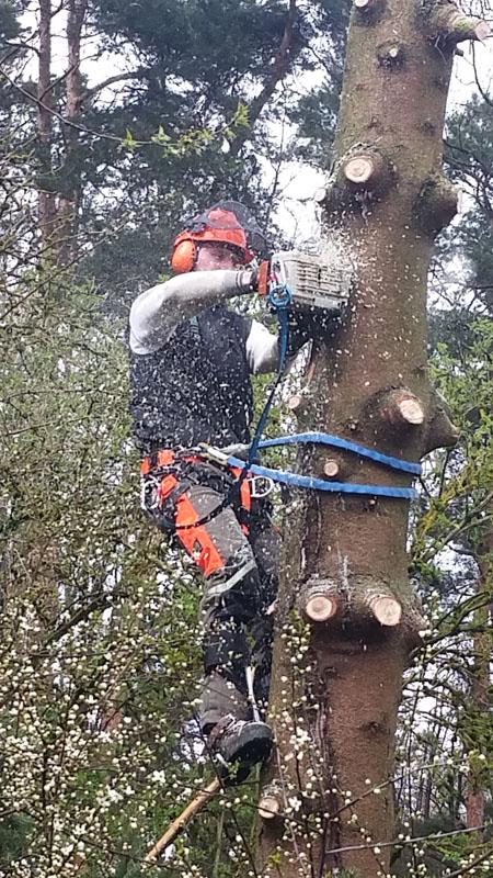 Baumfällung & Heckenpflege